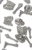 Skeleton body parts confetti